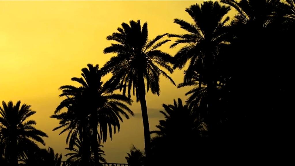 silhouette-palme
